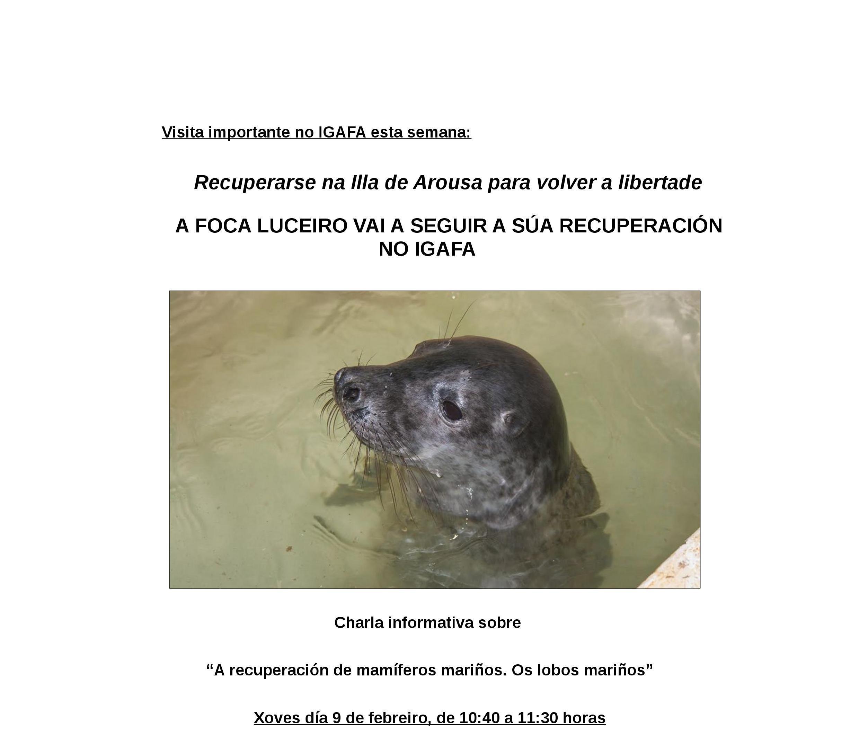 """A foca """"Luceiro"""" vai a seguir a súa recuperación no IGAFA"""