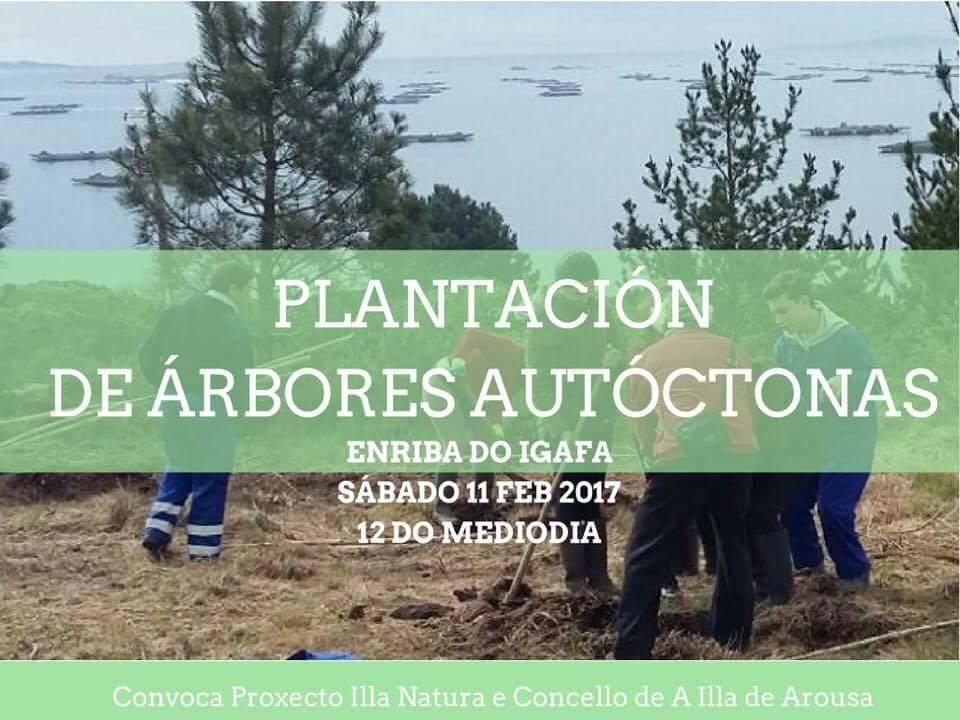 Plantación de árbores autóctonas
